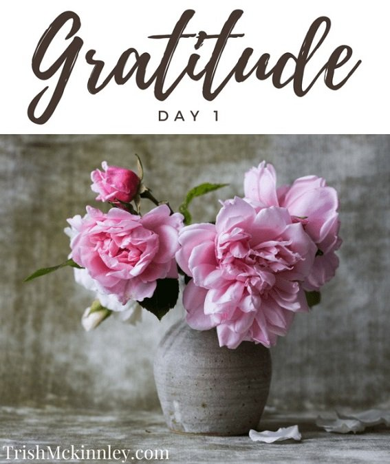 Pink flower in grew pot with 'Gratitude - Day 1' written above