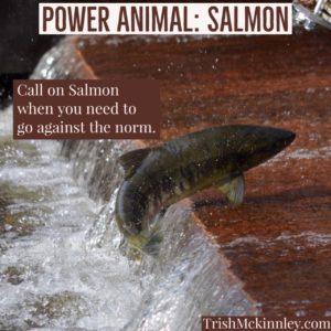Power Animal. SALMON Insta | Trish Mckinnley