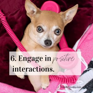 Ways to Stay Positive Interaction image of Dog with Bright Pink Phone